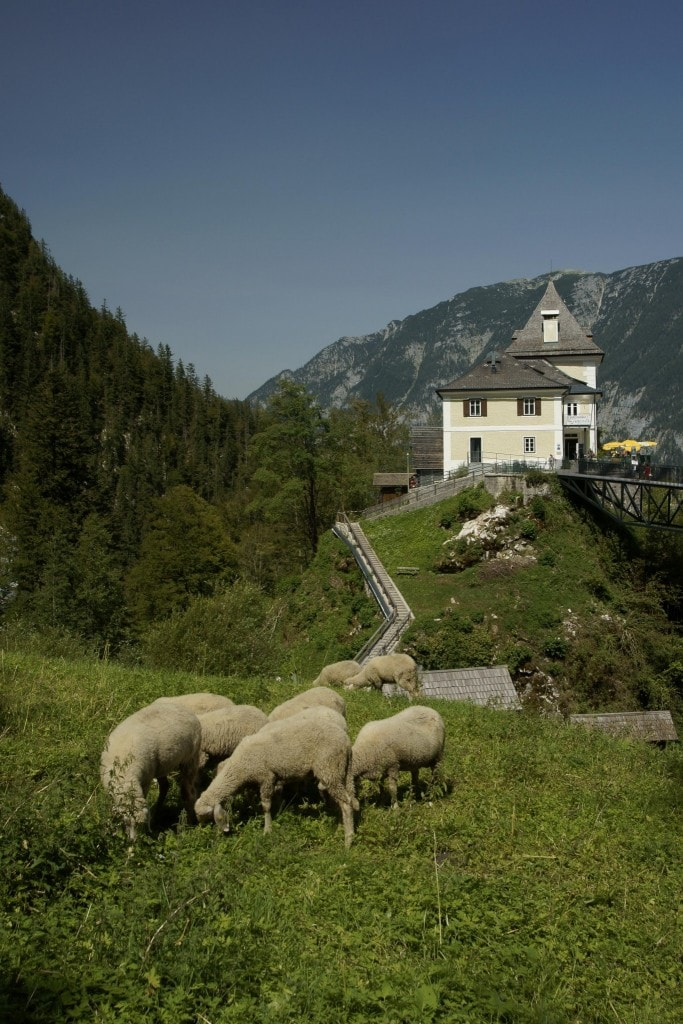 העיירה האוסטרית הציורית הלשטאט